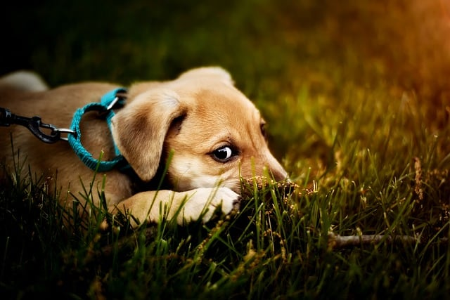image shows dog and puppy in grass representing canine parvo information and help