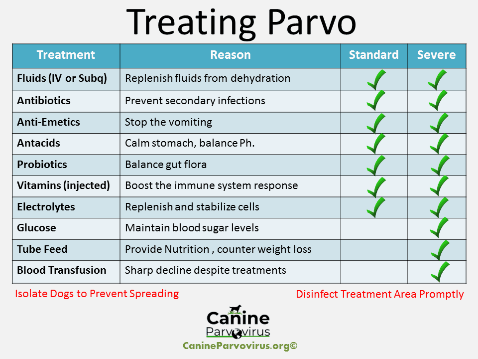 This outlines the treatments a dog receives after being infected with canine parvovirus. The parvo treatments inlcud fluids, antibiotics, anti-emetics, antacids, probiotics, vitamin injections, electrolytes, glucose, tube feeding and blood transfusion.