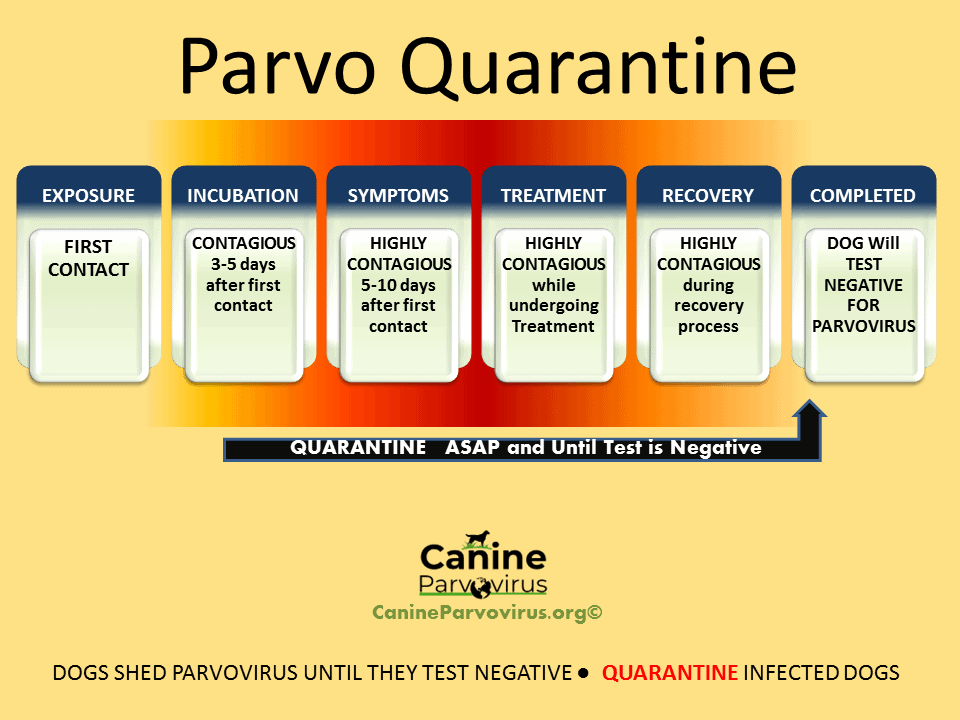 image guide for how long to quarantine a dog with parvo. by clicking this image, users will be led to the page with information regarding isolating and quarantine guide for dogs with parvo