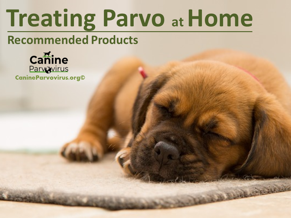 picture of dog with parvo and treating parvo at home.