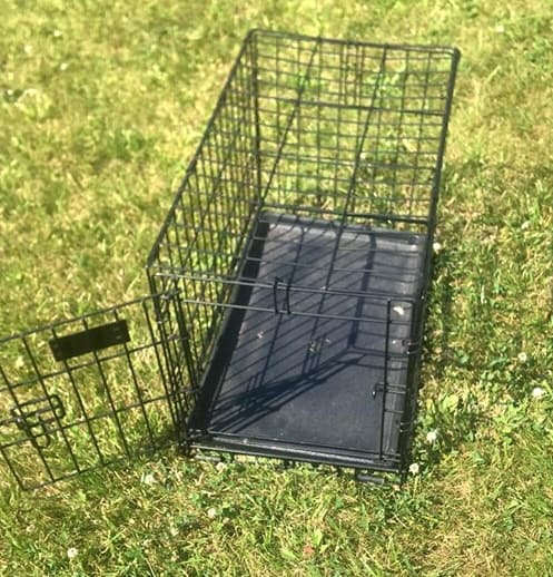how to clean a dog cage after parvo outbreak.